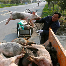 China loves pork too much