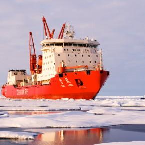 Polar bearings